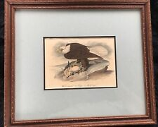 First Octavo 1841 Audubon Hand Colored Print of Bald Eagle - COA