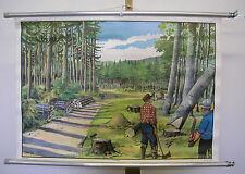 schöne Schulwandkarte Wald Holzfäller Waldarbeit 90x63 stihl ? vintage map 1965