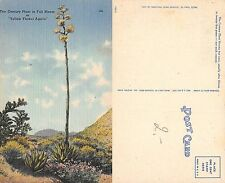 USA Texas - The Century Plant in Full Bloom or Yellow Flower Agave (A-L 290)