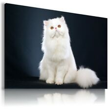 WHITE CAT KITTEN Domestic And Wild Animals Canvas Wall Art Picture AN61 MATAGA