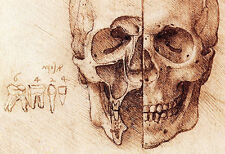 Sectioned Skull Poster, Diagram of a Skull by Leonardo DaVinci, Human Anatomy