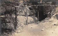 California Ca Real Photo RPPC Postcard c1920 CALISTOGA Petrified Forest MONARCH