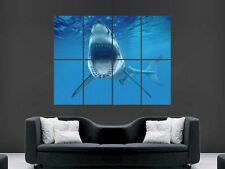 GREAT WHITE SHARK POSTER SHOWING TEETH  HUGE LARGE WALL ART  PICTURE