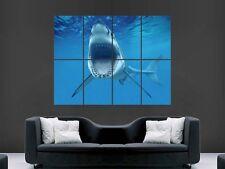 GRANDE Squalo Bianco POSTER che mostra i denti ENORME GRANDE Wall Art Picture