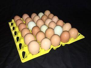 130 NEW Blank Egg Pulp Egg Cartons Holds 18 Eggs