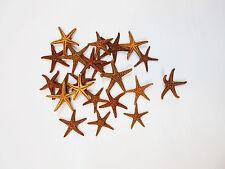 "12 Small Brown Starfish 3/4""- 1""  Beach Cottage Decor Shells Seashell Craft"