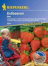 Kiepenkerl - Erdbeere * Elan * 2634 immertragendes Naschobst für Balkon