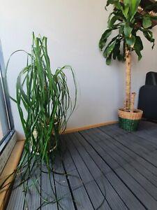 Terassenfliese 30x30cm grau  Bodenfliese Terassenbelag Balkon Garten wie Holz