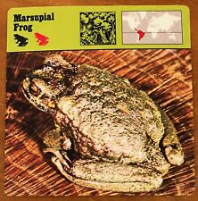 """""""Marsupial Frog"""", 1977 Editions Recontre Collectible 4 3/4"""" x 4 3/4"""" Card"""