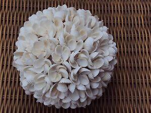 2 Dekokugeln Kugel Muschel kleine Venusmuscheln weiß 15 cm rund 600 gramm