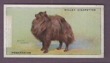 Pomeranian Dog Canine Pet 1930s Ad Trade Card
