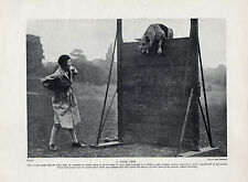 GERMAN SHEPHERD AND OWNER AGILITY TRAINING ORIGINAL DOG PRINT FROM 1934