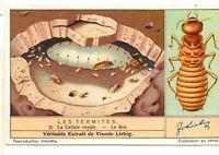 """S1364- CHROMO LIEBIG - 1937 -  """" LES TERMITES """" : 2. LA CELLULE ROYALE"""
