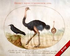 THE AFRICAN OSTRICH BIRD WATERCOLOR PAINTING ART REAL CANVAS GICLEEPRINT