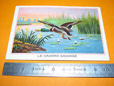 CHROMO BON-POINT ECOLE 1900-1914 CANARD SAUVAGE OISEAU ANIMAUX