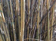 Bamboo Plants,sticks For Gardens,multi Use Sticks,