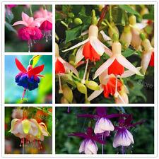 100Pcs Seeds Fuchsia Flowers Plants Rare Kinds Beautiful Shrubs in Home Garden