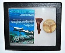 Onchopristis Vertebra & Tooth Fossil 2 inches Mdb w/Coa 100 Myo 10o 14578