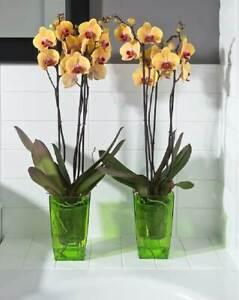 Decorative Flowerpots for Orchids. Original Design, Hard Plastic, Transparent