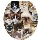 Toilet Tattoos Toilet Seat Cover - Cats Cats Cats - Round /Standard