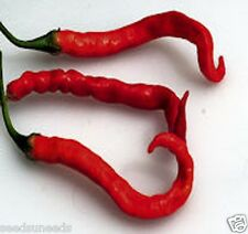 Indian Limo Chilli Chili Chile Hot Pepper Seeds