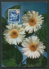 SPAIN MK 1950 FLORA BLUMEN MARGERITEN MAXIMUMKARTE MAXIMUM CARD MC CM d2911