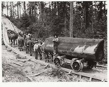 CALIFORNIA LOGGING ~ HORSE ROAD WITH WOODEN RAILS ~ c. - 1900