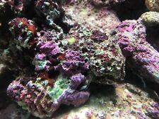 5 pounds of live rock fiji pukani tonga etc coral saltwater fish tank NR