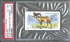 1922 Adkin & Sons BIGHORN SHEEP Wild Animals of the World Trade Card PSA 6