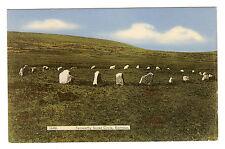 Fernworthy Sacred Circle - Dartmoor Photo Postcard c1950s