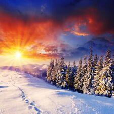 Winter Snow Sunrise Backdrop Tree Nature Landscape Photography Background 6x6ft
