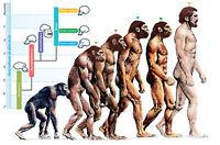 Framed Print - The Evolution of Humans (Picture Poster Homosapien Art Man Woman)