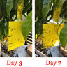 Yellow Sticky fruit fly flying Insect Garden Trap glue on double sided no mess