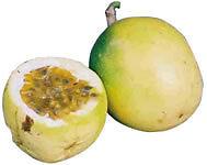 25 Seeds Semi Maracuja Passiflora edulis Passion Fruit