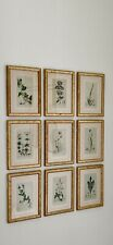 More details for beautiful set of 9 hand coloured 19th century botanical prints
