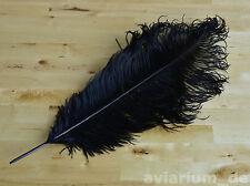 Schöne Straußenfeder Straußenfedern Federn 1 Stk. 50-55 cm schwarz