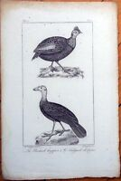 La Pintade Huppee, Le Talegale de Cuvier - 1830s French Bird Print