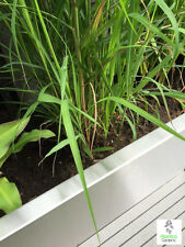 Garden Bedding Edging Strips | Grass Paths, Tree & Lawn | Stainless Steel Border