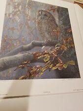 Tawny Owl in Beech ~ Robert Bateman ~ Art Print