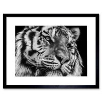 Tiger Close Up Framed Wall Art Print 12X16 In