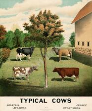 Cattle Cow Rancher Motivational Poster Art Rodeo Supplies Cowboy Farming MVP390