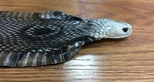 Genuine Cobra snake skin hide pelt with head & eyes 36 inches long