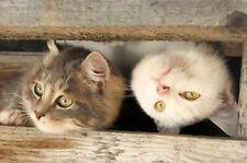 Kühlschrank magnet funny cat kitten Foto cats Tafel Büro kuche Souvenir Geschenk