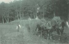 a animals horse pony animal pet antique old picture postcard hay making