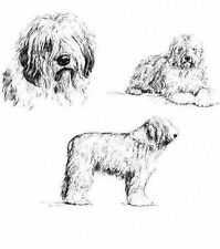Old English Sheepdog - 1963 Vintage Dog Print - Matted