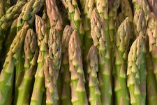 "3 X ASPARAGUS seedling plants /""MARY WASHINGTON"""
