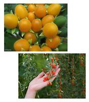 exotisch Garten Pflanze Samen Sämereien Exot SAMTPFIRSISCH GOJIBEERE
