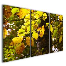 Quadri moderni fiori Foliage irradiato dal sole stampe su tela canvas ® quality