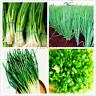 100 PCS Seeds Chinese Green Onion Bonsai Perennial Vegetable Home Garden Plants