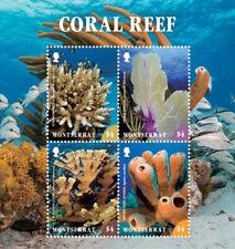 Montserrat 2017 Marine life coral reef  I201803